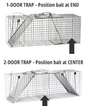 The single and two door trap for raccoons