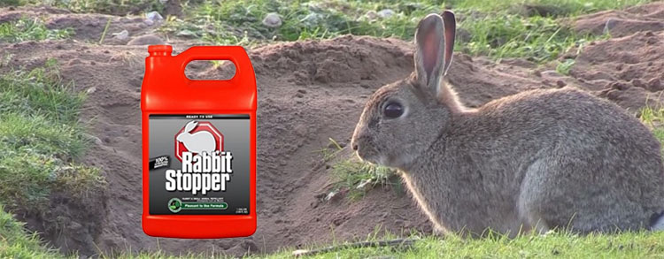 Rabbit repellents