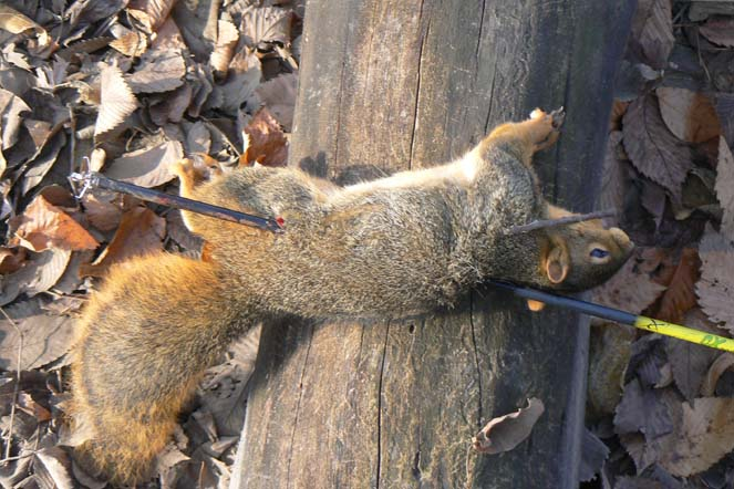 How to Bow Hunt a Squirrel