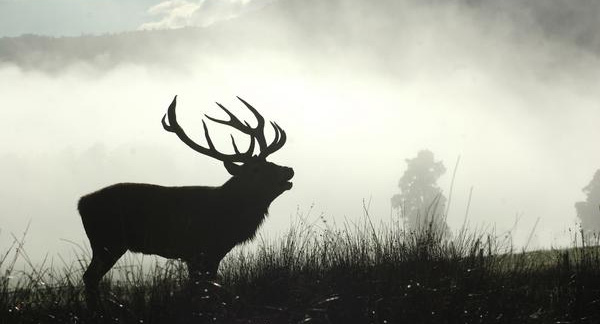 The best time to hunt a deer bedding area