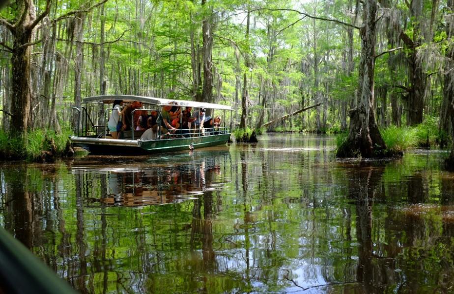 people walking in the swamp