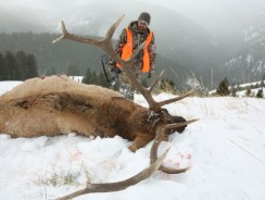 7 Practical Tips to Improve Your ELK Hunting Skill