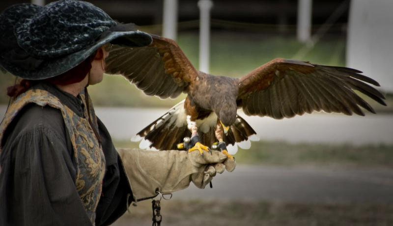 Falconry – The Only Guide You Need