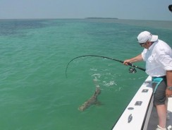 Shark Fishing: A Complete Beginner's Guide