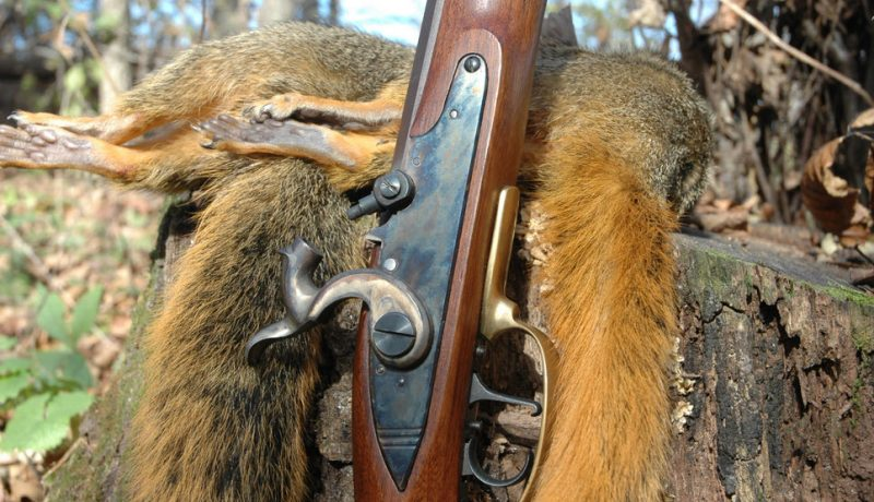 Why You Shouldn't Miss the Thrills of November Squirrel Hunting